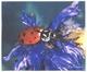utěrka z mikrovlákna  BERUŠKA 18x15cm v průhledném pouzdýrku